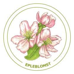 Epleblomst-21x21cm